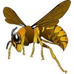 【画像あり】家の前にめっちょデカいスズメバチが転がってたんだがwwwwwwww