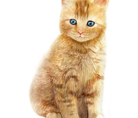 【画像あり】不安になる猫が発見されるwwwwwwww