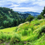 日本の山の土どっかに捨てて全部平らにしたらメチャクチャ発展するんやないの?