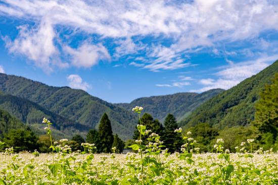 これが日本蕎麦の闇wwwwwwww