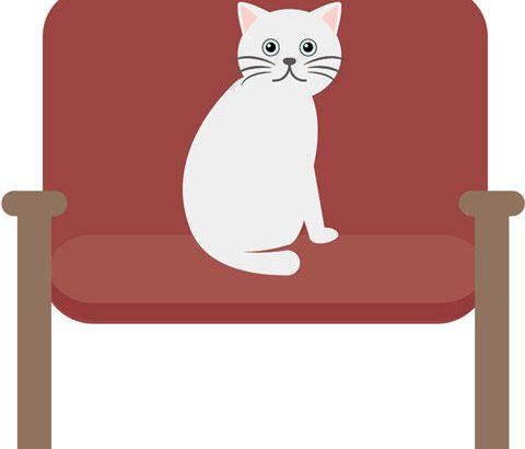 ネコ「懐きません」「ゲロ吐きます」「ソファボロボロにします」←こいつが天下とれた理由wwwwwwww